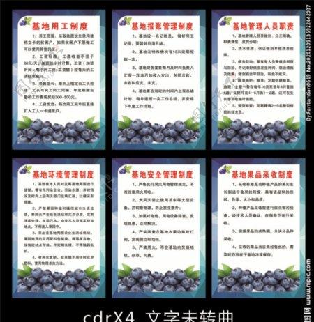 蓝莓基地制度图片