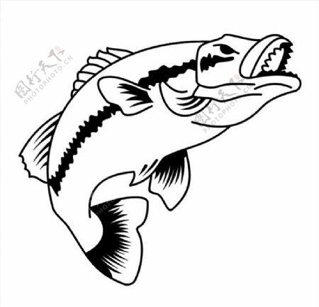 大马哈鱼矢量图图片
