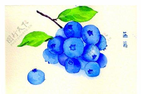 蓝莓手绘图片