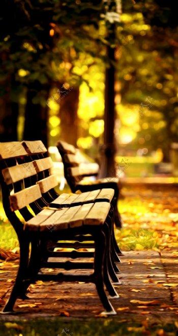 秋日树阴座椅风景油画图片