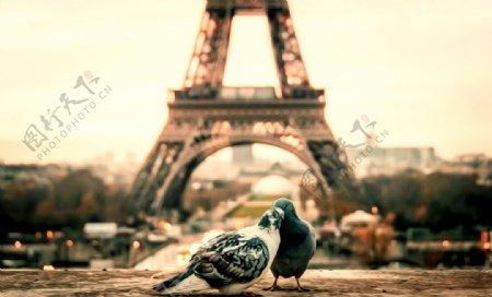 鸽子油画图片