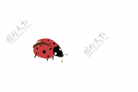 矢量卡通瓢虫图片