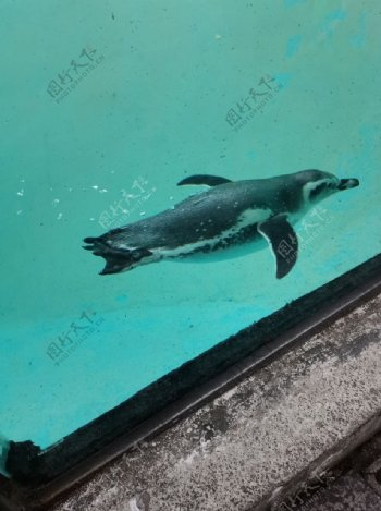 动物园企鹅图片
