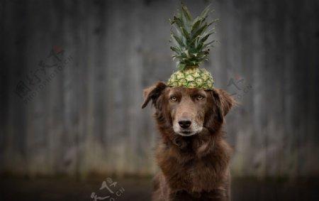 动物宠物狗猫图片