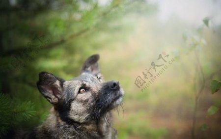 动物宠物狗猫生物世界图片
