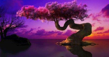 枫树max2014格式图片