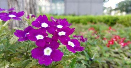 景观花卉图片