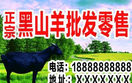 黑山羊展板图片